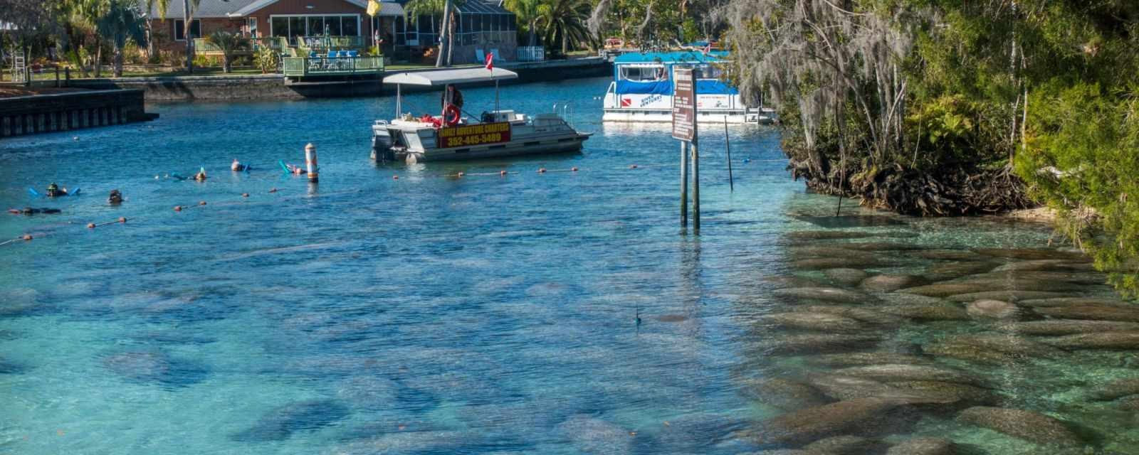 Swim With Manatees In Florida Crystal
